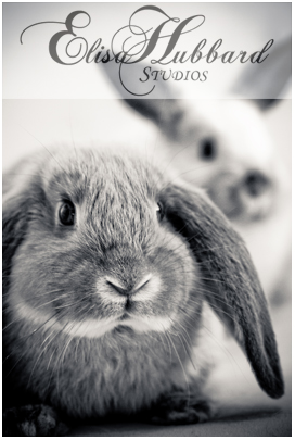 bunnies Moose & Oreo